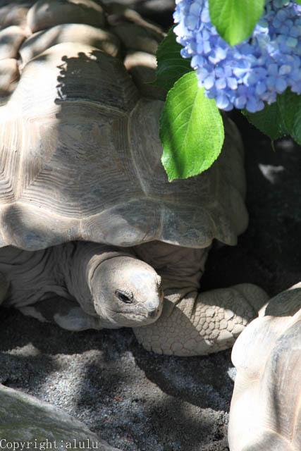 アルダブラゾウガメ 動物園