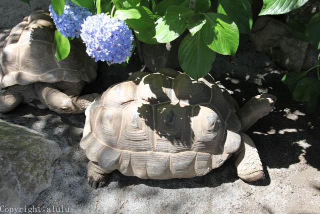 遊亀公園附属動物園 カメ