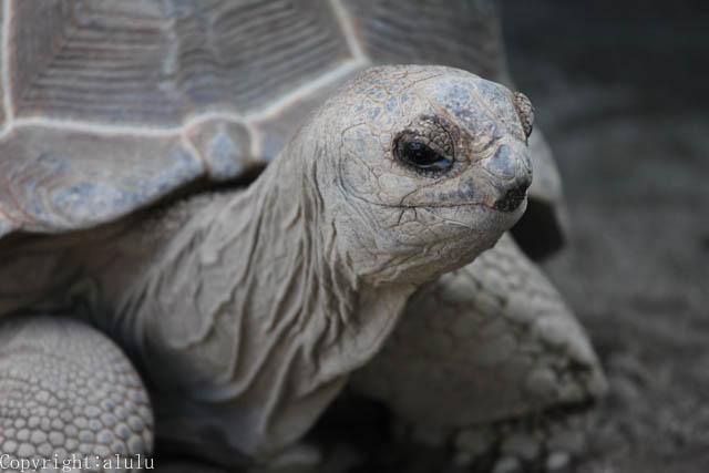 遊亀公園附属動物園 動物写真