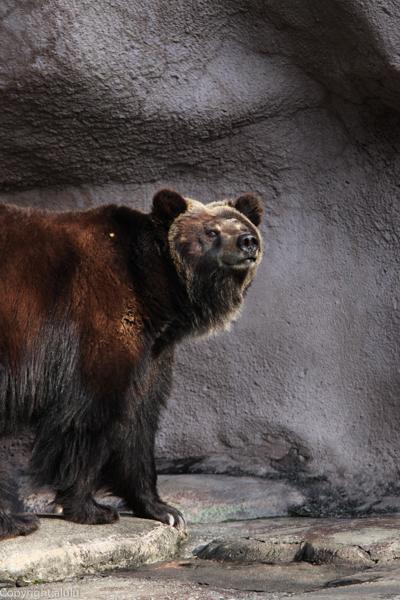 クマ 画像