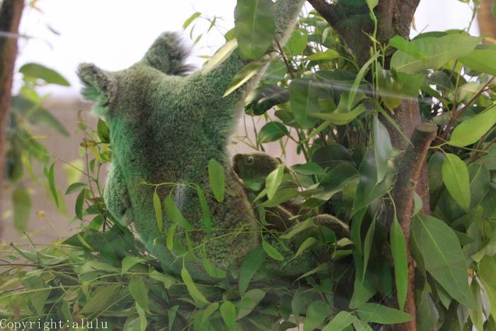 コアラ 赤ちゃん 動物園