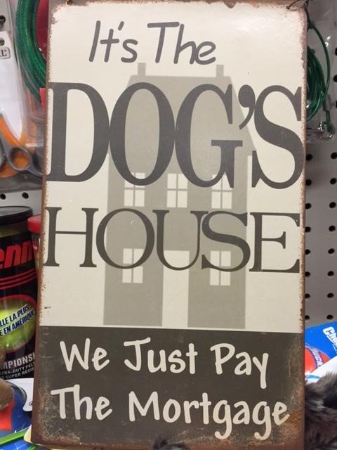 DogHouse-14Feb15.jpg