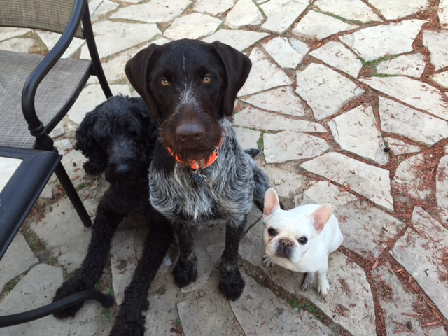 Dogs2-03May15.jpg