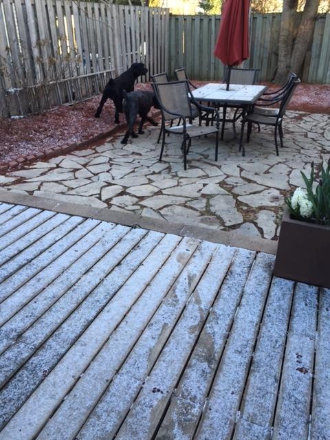 Snow1-23Apr15.jpg