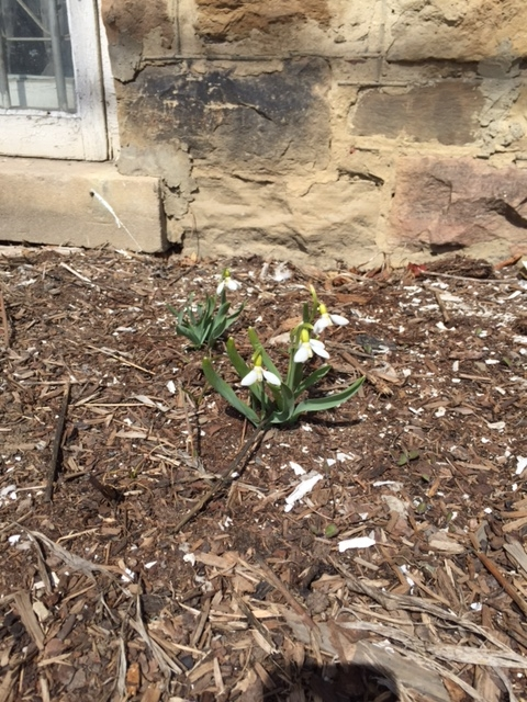 Spring1-03Apr15.jpg