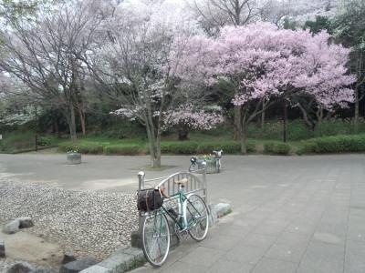 photo_2015_mituikesakura_19_2015_0401.jpg