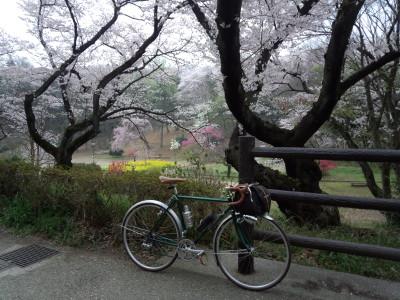 photo_2015_mituikesakura_1_2015_0401.jpg
