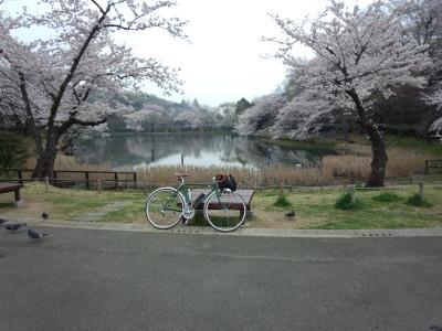 photo_2015_mituikesakura_20_2015_0401.jpg