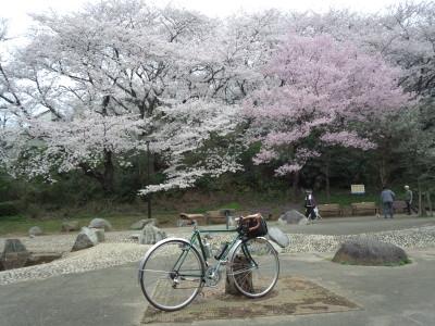 photo_2015_mituikesakura_2_2015_0401.jpg