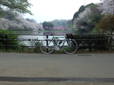 photo_2015_mituikesakura_8_2015_04011.jpg