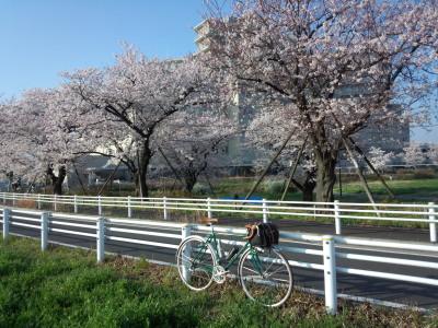 photo_2015_sakura_turumigawa_1_2015_0331.jpg