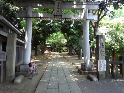 photo_derosa_goriyakupota_0502_5_2015_0502.jpg