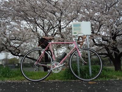 photo_derosa_sakura_4_2015_0406.jpg