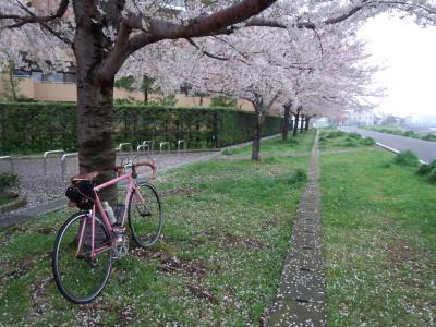 photo_derosa_sakura_9_2015_0406.jpg