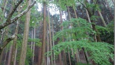 photo_kyotogoriyakupota_higasiyama_10_2015_0420.jpg