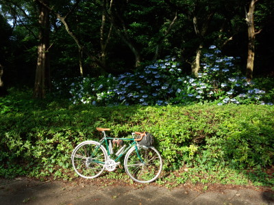 photo_randner_yokohamatsuginami_1_2015_0624.jpg