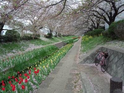 photo_tyurip_4_2015_04101.jpg
