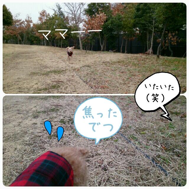 201501301307389af.jpg