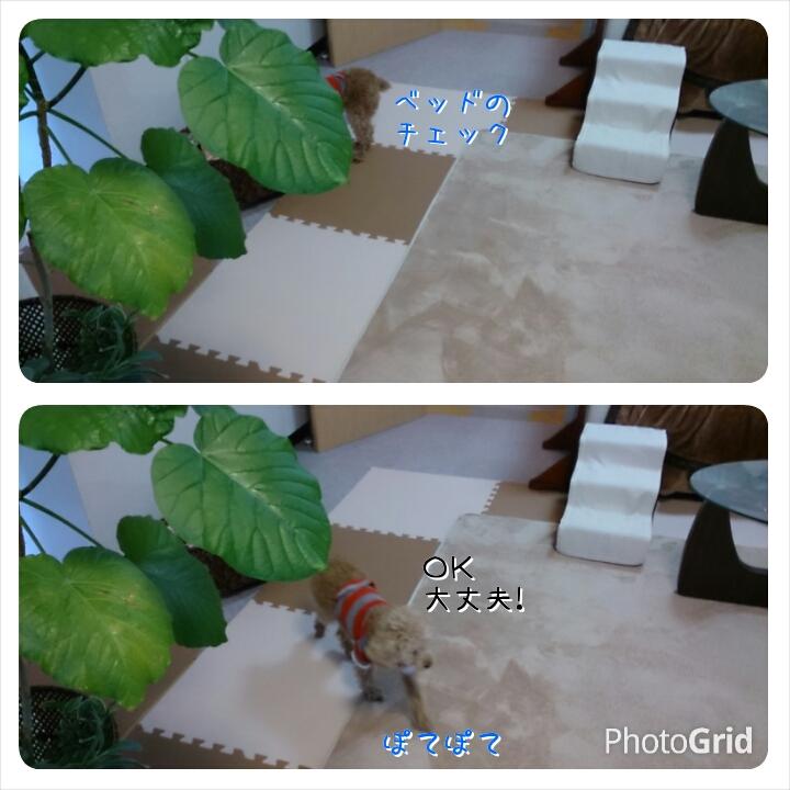 20150326183155831.jpg