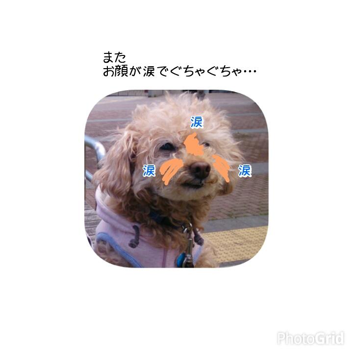20150416124514a1a.jpg