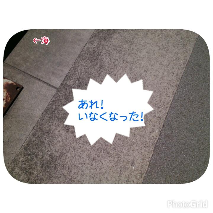 201504191348095ec.jpg