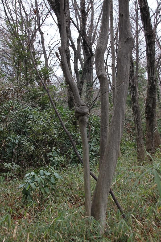 森の小径_4
