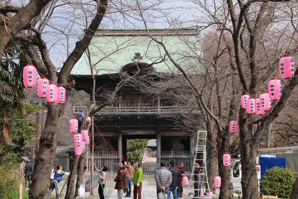 参道では桜まつりの飾り付けが始まっていた_3