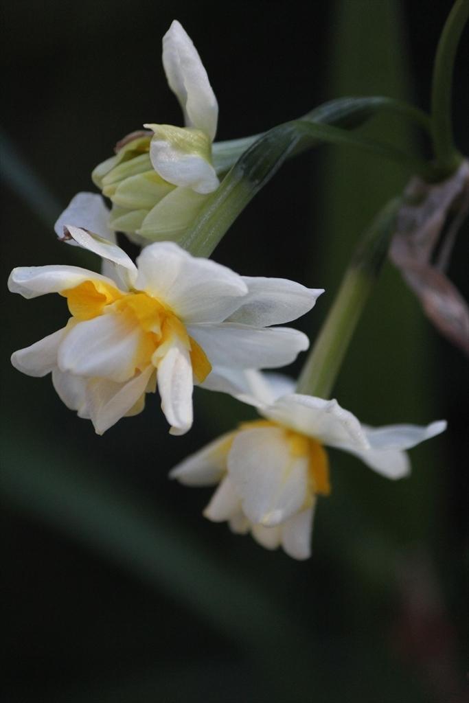 前庭の花はごくわずか_2