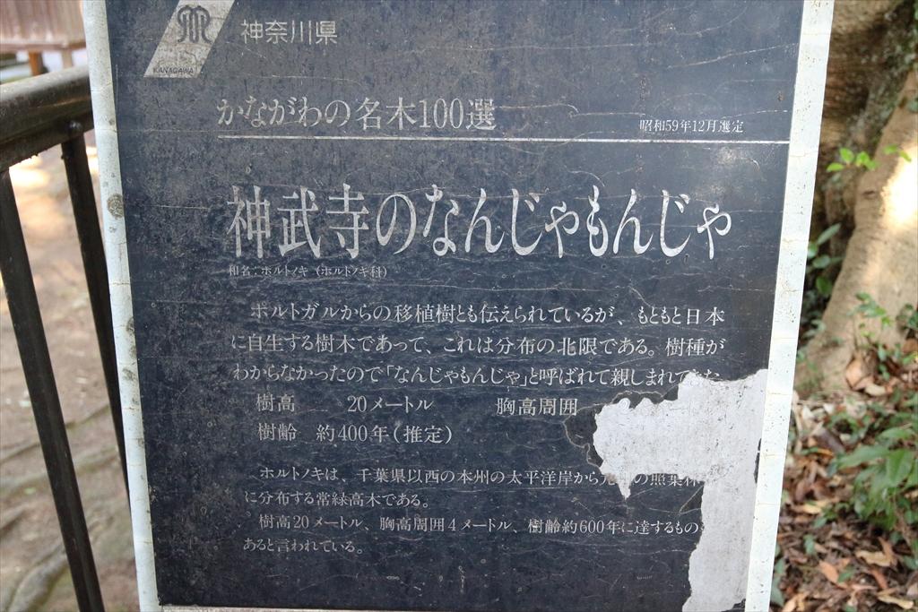 「なんじゃもんじゃ」の木_3