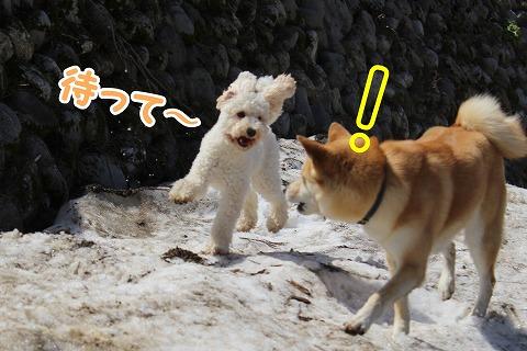 s-dogrun150720-IMG_7464