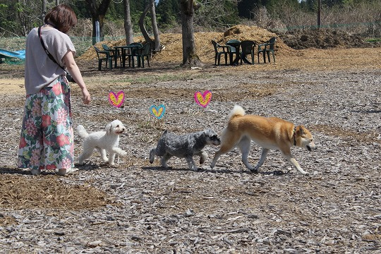 s-dogrun150720-IMG_7406
