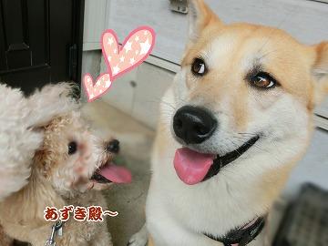 s-dogrun150720-CIMG9433