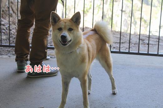 s-kiyosu150725-IMG_7618