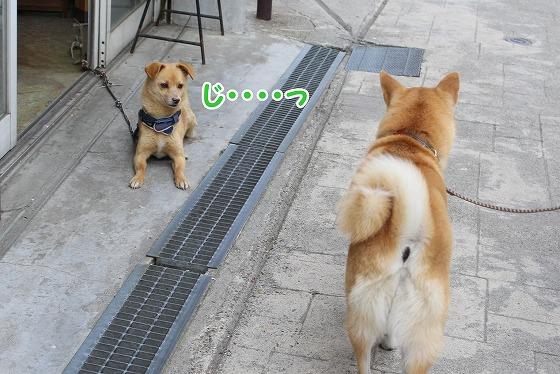 s-nozawa150726-IMG_7689