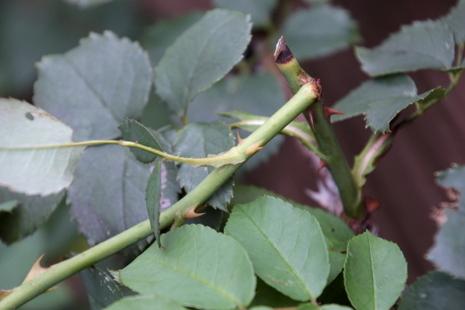 折れた枝1