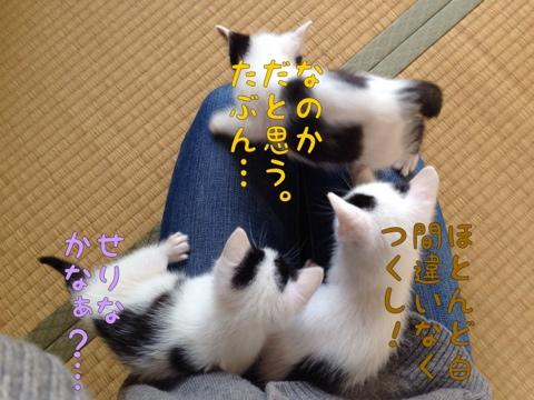 fc2blog_20150424114741034.jpg