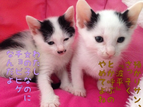fc2blog_20150424114805bf7.jpg
