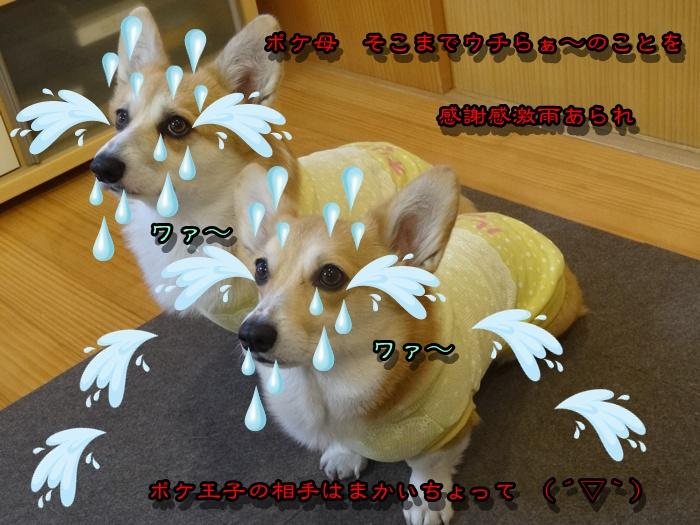 DSC00811_2015022400572565f.jpg