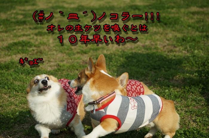 DSC00957_2015032321203042c.jpg