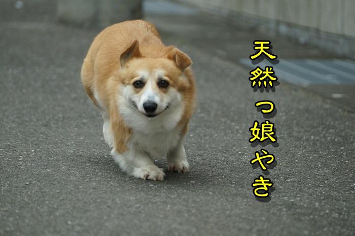 DSC01474_20150410141014802.jpg