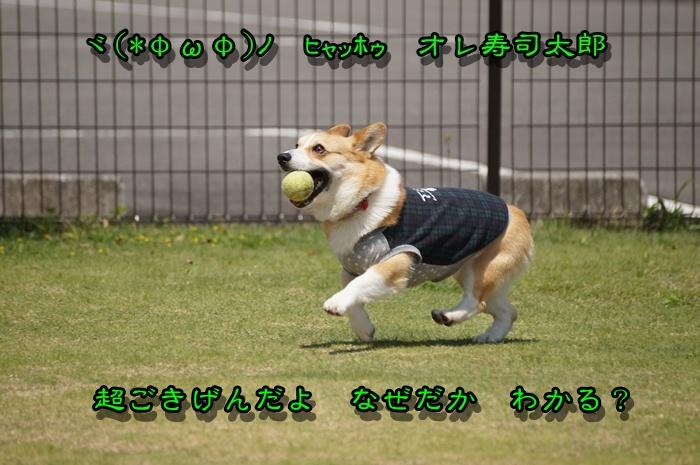 DSC01645_201504161707260af.jpg
