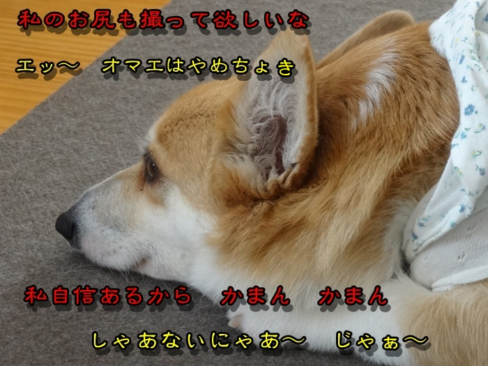 DSC02379_20150317200728ab9.jpg