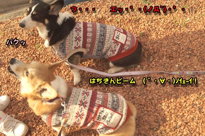 DSC08184_20150216211853d81.jpg