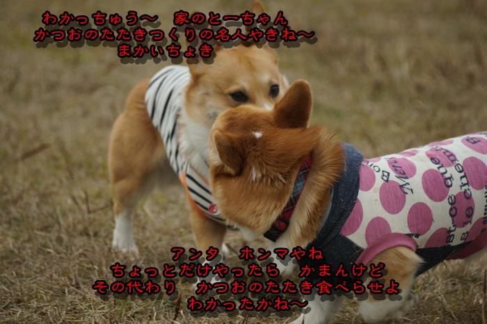 DSC08619_20150221202348bc3.jpg