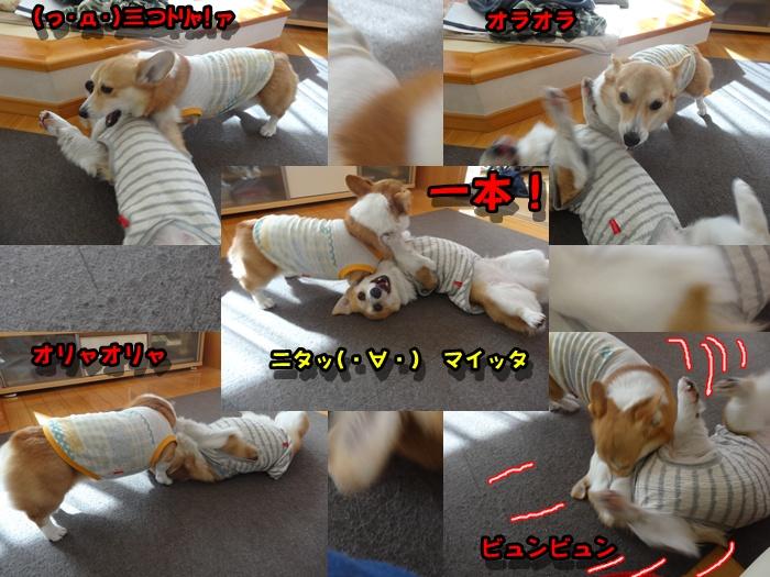 cats_20150214014521173.jpg
