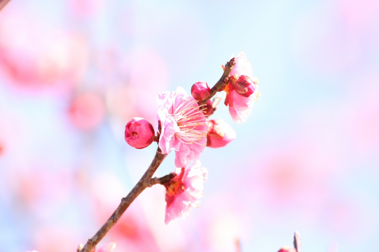 shuku-IMG_8418.jpg