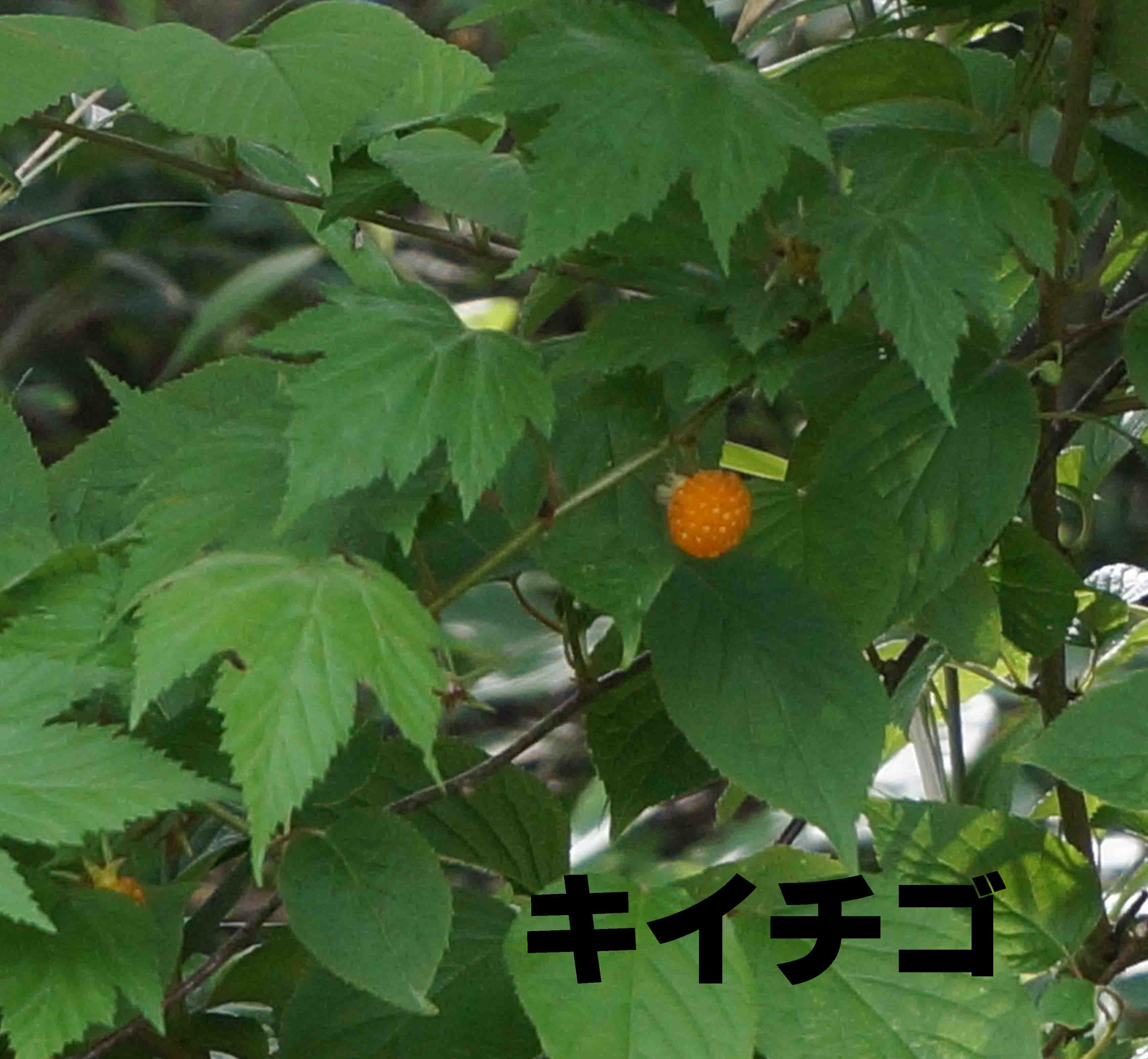 20150529164642fc7.jpg