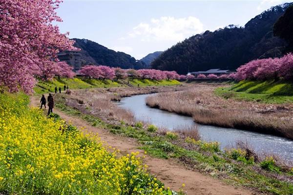 minaminosakura1.jpg