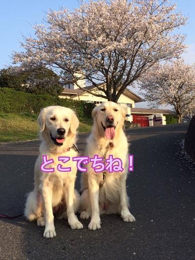 fc2blog_20150407205437ec6.jpg