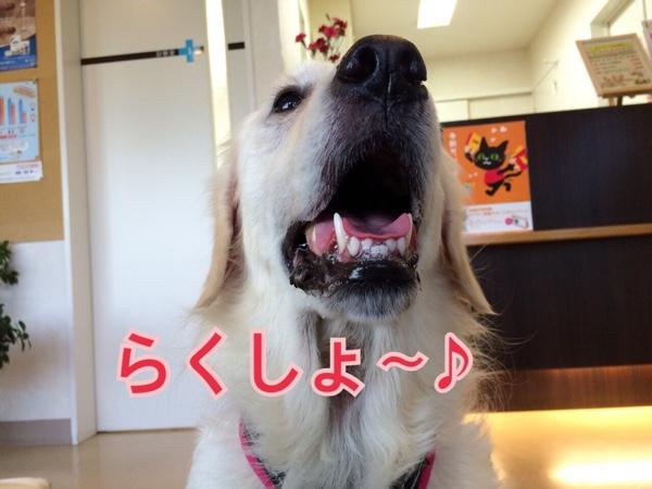 fc2blog_20150411121424388.jpg